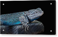 Mr Blu Acrylic Print by Michael Moriarty