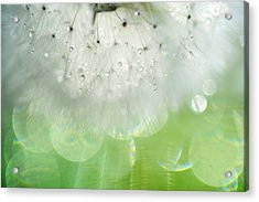 Mr. Dandelion. Inner Light Acrylic Print by Jenny Rainbow