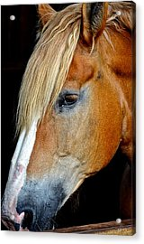 Mr Ed Acrylic Print by Frozen in Time Fine Art Photography