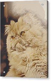 Mr. Elliot Acrylic Print by Alberto Ponno