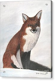 Mr Fox Acrylic Print by Dana Carroll