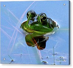 Acrylic Print featuring the photograph Mr. Frog by Donna Brown