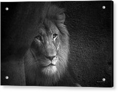 Mr Lion In Black And White Acrylic Print by Thomas Woolworth