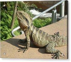 Mr Lizard Posing Acrylic Print