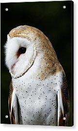 Mr Owl  Acrylic Print