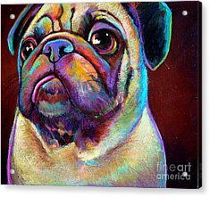 Mr. Pugnacious  Acrylic Print by Robert Phelps