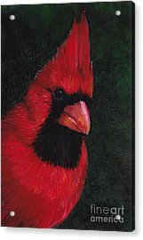 Mr Red Cardinal Acrylic Print by Charlotte Yealey