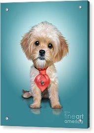 Mr. Toby Waffles The Cavapoo Acrylic Print by Catia Cho
