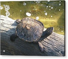 Mr Camaflauged Turtle Acrylic Print