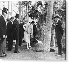 Mrs. Calvin Coolidge Planting Acrylic Print by Underwood Archives