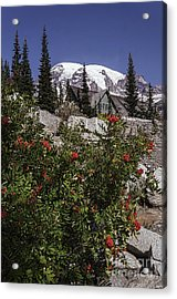 Mt Ash At Mt Rainier Acrylic Print