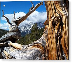 Mt. Charleston Thru A Tree Acrylic Print