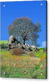 Mt. Diablo Oak Tree Acrylic Print by Wernher Krutein
