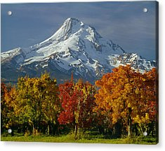 1m5117-mt. Hood In Autumn Acrylic Print