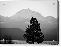 Acrylic Print featuring the photograph Mt. Lassen With Tree by Jan Davies