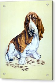 Mucky Pup Acrylic Print by Andrew Farley