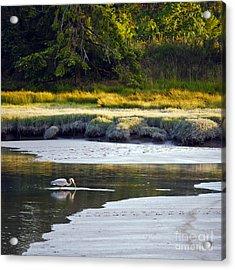 Mud Bay Heron 1 Acrylic Print