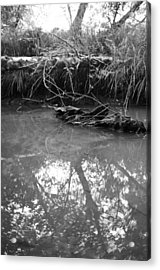 Acrylic Print featuring the photograph Muddy Creek by Adria Trail