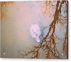 Muddy Spring Turtle Acrylic Print by Patricia Januszkiewicz