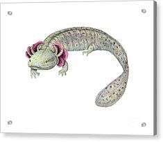Mudpuppy Acrylic Print