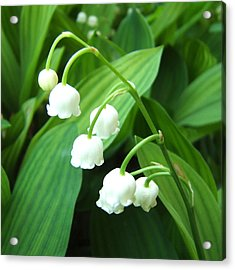 Acrylic Print featuring the photograph Muguet by Marc Philippe Joly
