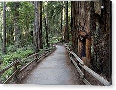 Muir Woods National Park Service Acrylic Print