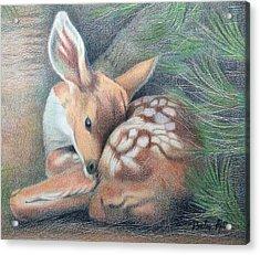 Mule Deer Fawn Acrylic Print