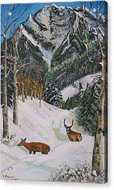 Mule Deer In Winter Acrylic Print