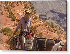 Mule Wrangler On The South Kaibab Trail Acrylic Print