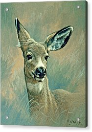 Muley Fawn At Six Months Acrylic Print by Paul Krapf