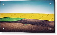 Multi Colored Panoramic Spring Field Acrylic Print by Borchee