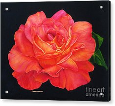 Multi-colored Rose Oils On Canvas - Print Acrylic Print by Margaret Newcomb