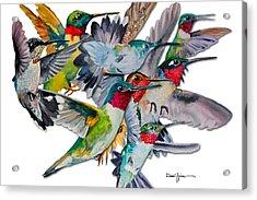 Da053 Multi-hummers By Daniel Adams Acrylic Print