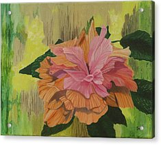 Multi-petaled Pink Peach Hibiscus Acrylic Print by Hilda and Jose Garrancho