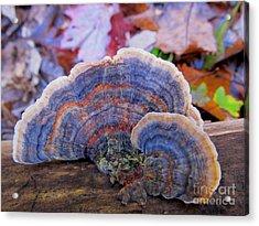 Multicolor Mushroom Acrylic Print