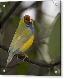 Multicolored Beauty Acrylic Print