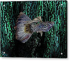 Multicolored Tropical Fish In Digital Art Acrylic Print by Mario Perez