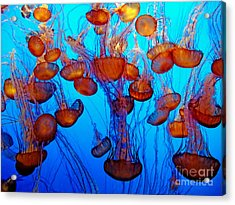 Multiple Jellyfish  Acrylic Print by Jim Fitzpatrick