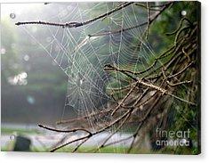 Multiple Webs - Near Acrylic Print