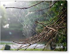 Multiple Webs - Near Acrylic Print by Kenny Glotfelty