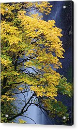 Multnomah Falls Maple Acrylic Print