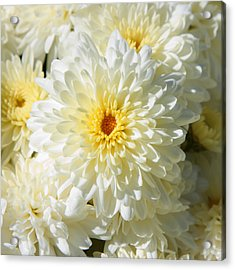 Acrylic Print featuring the photograph Mums The Word by Courtney Webster