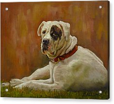 Munson An American Bull Dog Acrylic Print by Nora Sallows