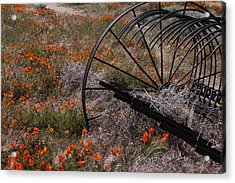 Munz Poppy Acrylic Print by Ivete Basso Photography