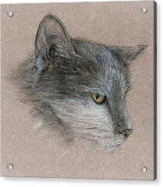 Murray The Cat Acrylic Print