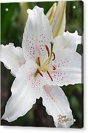 Muscadet Lily Acrylic Print