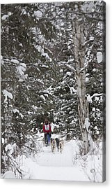 Musher In The Forest Acrylic Print by Tim Grams