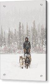 Mushing Through A Snow Storm Acrylic Print by Tim Grams