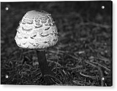 Mushroom Acrylic Print by Adam Romanowicz