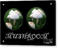 Mushroom Art Collection 3 By Saribelle Rodriguez Acrylic Print by Saribelle Rodriguez